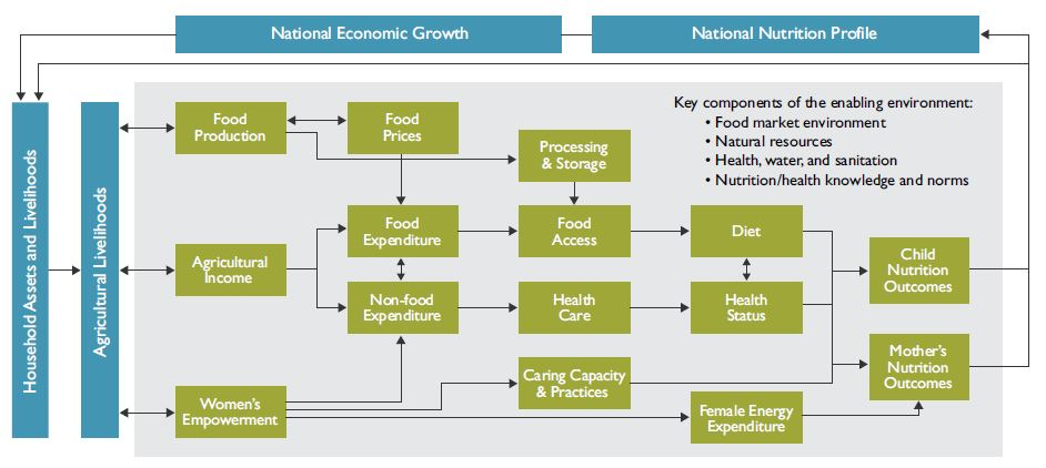 Figure 1. The conceptual pathways between agriculture and nutrition